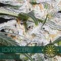 Lowryder (Vision Seeds)