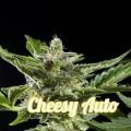 Cheesy Auto (Philosopher Seeds)