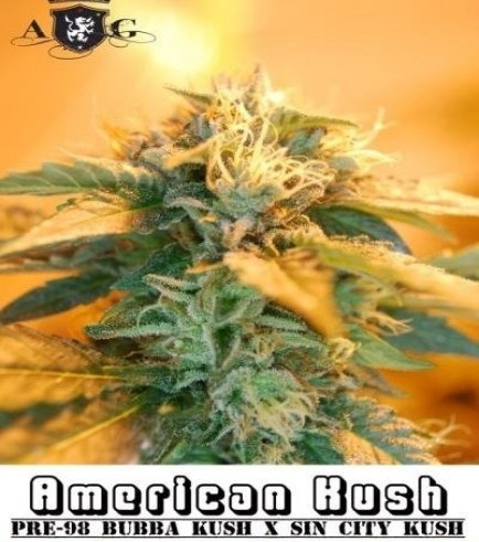 American Kush (Alphakronik Genes)
