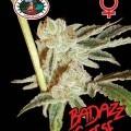 Badazz Cheese (Big Buddha Seeds)
