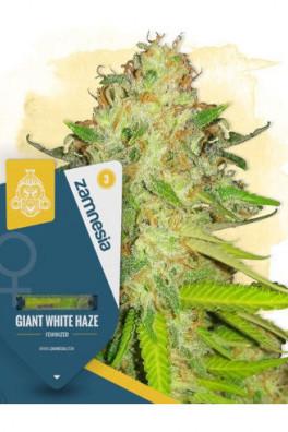 Giant White Haze