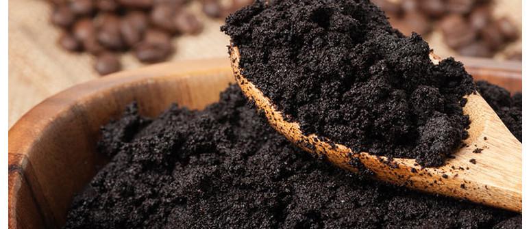 Fondi di caffè per migliorare il substrato della cannabis