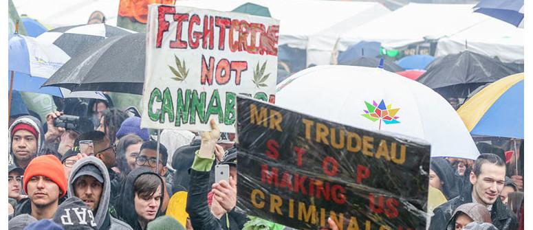Legalizzazione della cannabis in Canada: una sintesi del primo anno