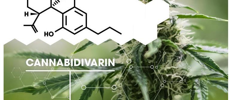 Che cosa è la cannabidivarina (CBDV)?
