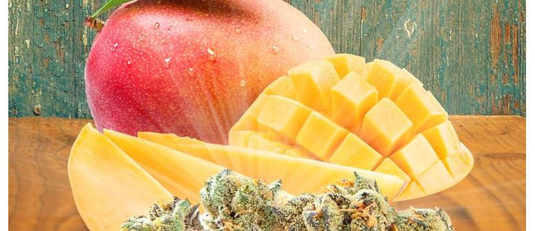 Volete Aumentare gli Effetti della Ganja? Mangiate un Mango