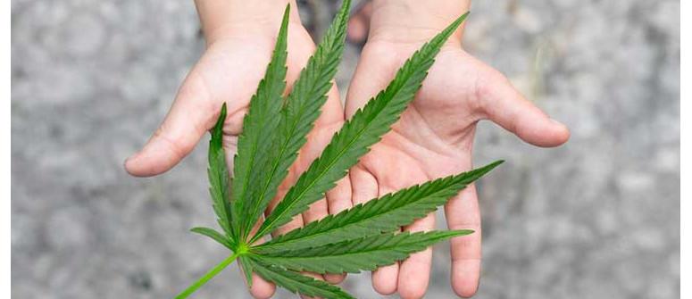 Adolescenti e Consumo di Marijuana, Come Occuparsene