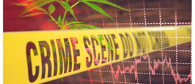 La legalizzazione della cannabis riduce davvero i tassi di criminalità?