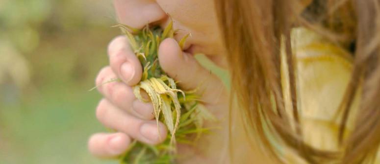 Cannabis e terpeni: tutto ciò che vi occorre sapere