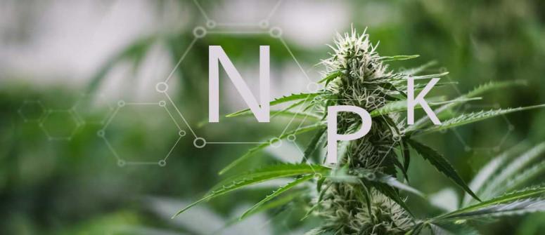 Il significato di N-P-K nella coltura della cannabis