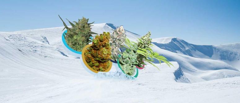 5 Varietà di Cannabis da Abbinare a 5 Sport Olimpici