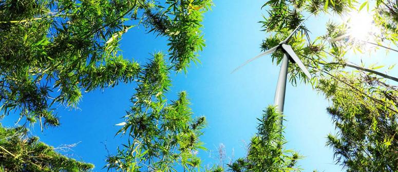 L'impatto ambientale della coltivazione dell'erba