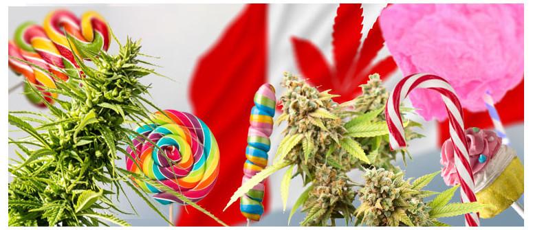 10 Varietà di Cannabis che Potrebbero Essere Vietate in Canada
