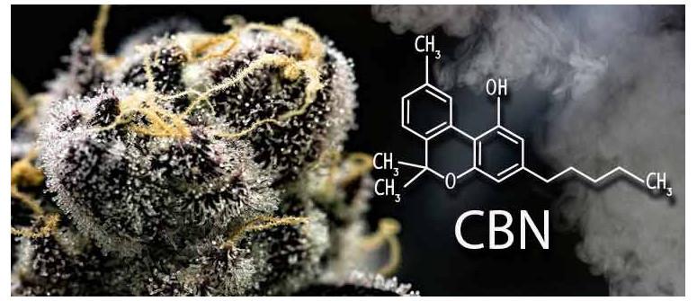 Cos'è il CBN (Cannabinolo)?