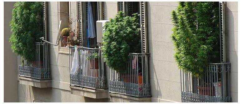 7 Consigli per coltivare un'ottima marijuana su balconi o Terrazze