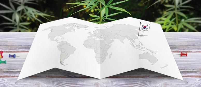 Stato legale della cannabis in Corea del Sud (Repubblica di Corea)