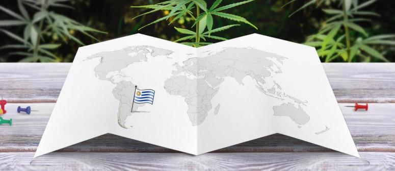 Stato legale della cannabis in Uruguay