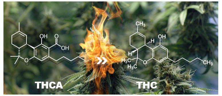 La differenza fra THC e THCA