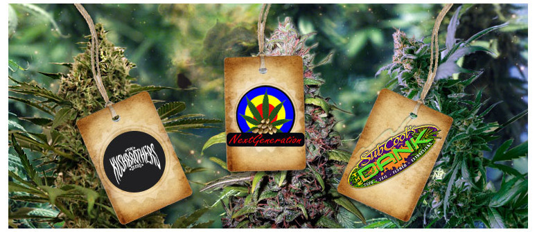 Nuovi breeder online: The Kush Brothers, NGSC e Subcool's The Dank