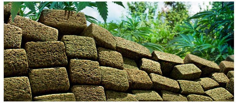 L'Ascesa e il Declino della 'Brick Weed'