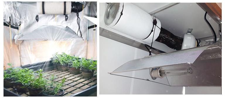 Controllo degli odori e coltivazione di marijuana indoor – Come eliminare l'odore