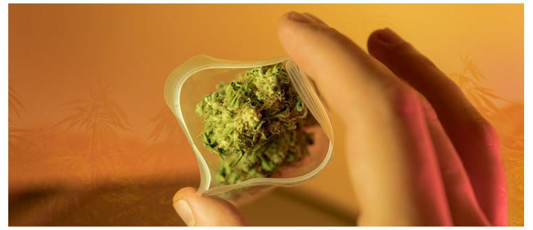 10 Consigli per Chi Assume Cannabis per la Prima Volta