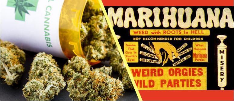 Perché preferiamo cannabis alla marijuana?