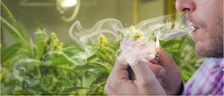 Do fastidio alle mie piante di cannabis se gli fumo vicino?