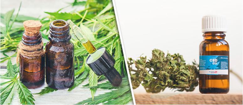 La differenza tra olio di CBD E olio di cannabis