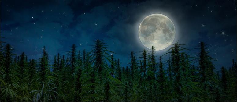 La Coltivazione con Lasi lunari e la Cannabis: Osservare la Luna per un Raccolto Migliore