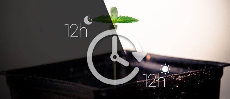 Più raccolti di erba durante l'anno con il metodo 12/12