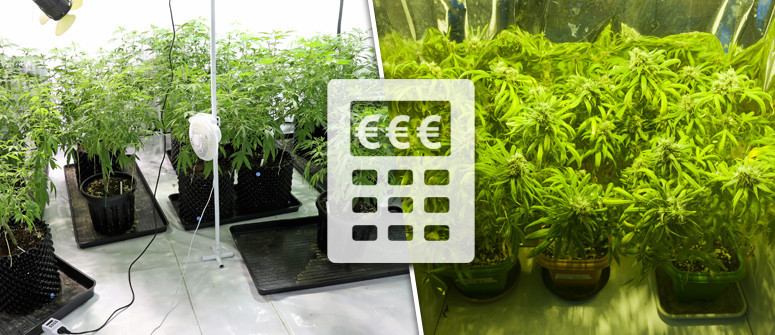 Quali sono i costi della coltivazione indoor della marijuana?