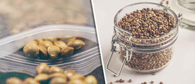 Come conservare al meglio i semi Di cannabis