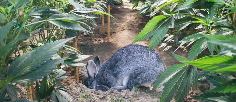Come proteggere le colture outdoor dagli animali