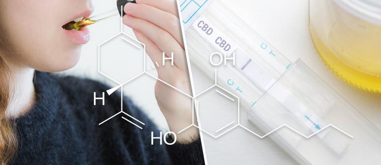 Assumendo olio di CBD si può fallire un test antidroga?