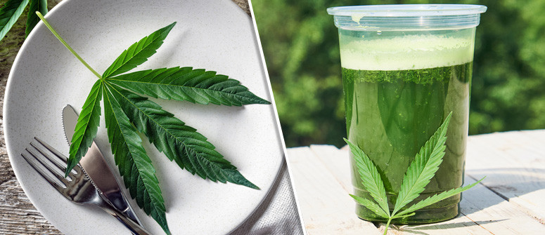 I benefici di aggiungere la cannabis cruda nella vostra alimentazione