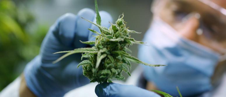Cosa sono i cannabinoidi e da dove provengono?
