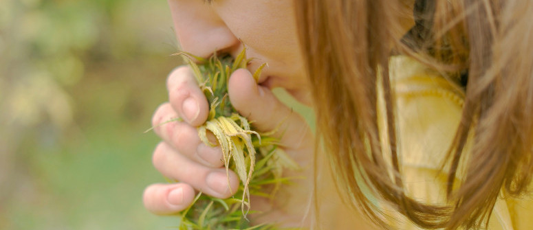 Le 10 migliori varietà di cannabis che fanno poco odore