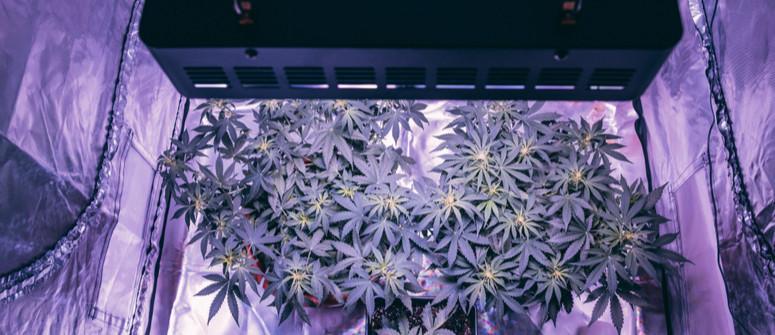 Come costruire un grow box fai-da-te per cannabis con poco budget