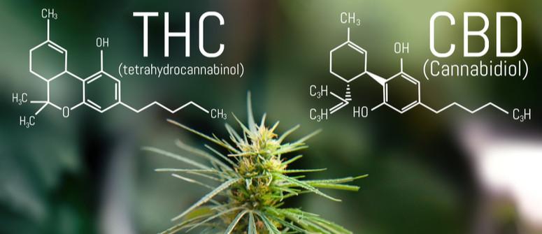 Qual è il Miglior Rapporto CBD:THC nella Cannabis?