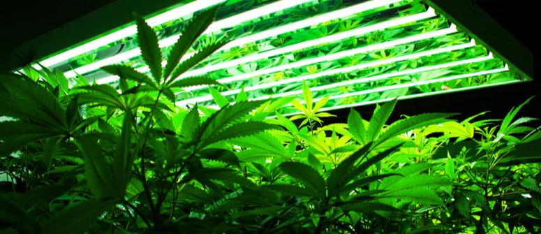 Quali Sono le Migliori Lampade per Coltivare la Cannabis?