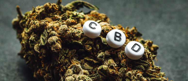 Come Coltivare Varietà di Cannabis Ricche di CBD