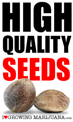 I Love Growing Marijuana Quality Seeds